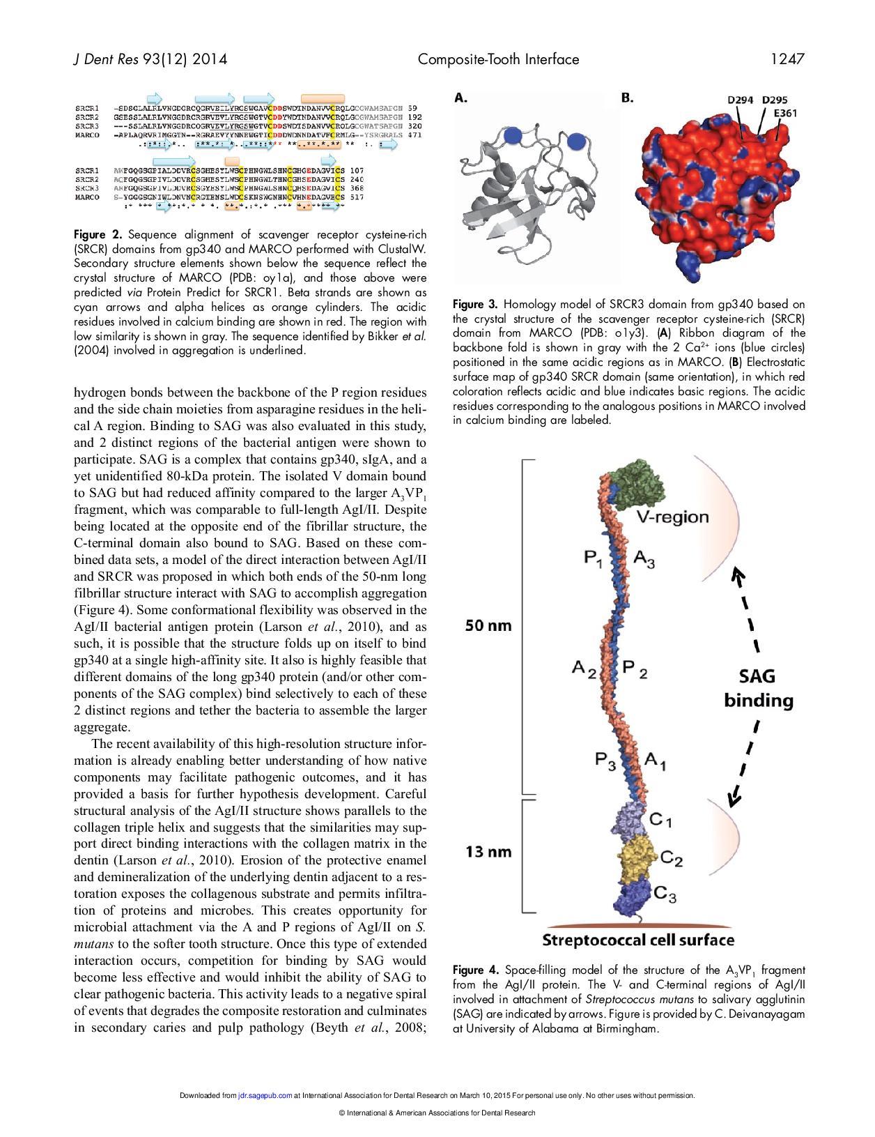 J DENT RES-2014-Spencer-1243-9-page-005
